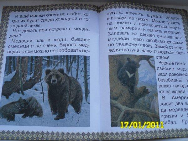 13_bear_2