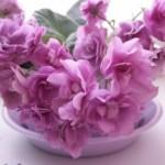 Заседание клуба любителей цветоводства «Гармония» «Цветы как символ красоты»