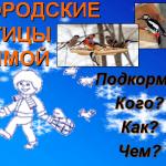 4_pticy_1