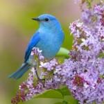 Экологический праздник «Здравствуй, птичья страна!»