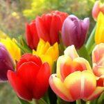 Заседание клуба любителей цветоводства «Гармония» «Язык цветов»