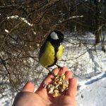 pomozhem-pticam