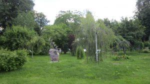 в ботанический сад ЯГПУ им. К.Д. Ушинского