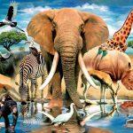 Зоожурнал «Эти удивительные животные»