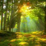 Интерактивная игра-викторина «Тайны лесной тропинки»