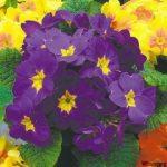 Заседание клуба любителей цветоводства «Гармония» «Цветы нам дарят настроенье»
