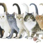 Международному дню кошек