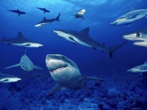 Познавательное мероприятие «Мир морей и океанов. Акулы»