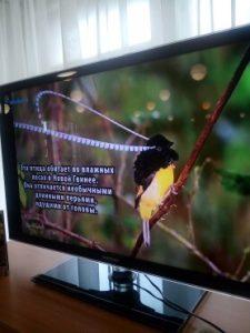 День Информации, посвященный Международному дню птиц