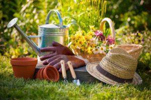 Встреча любителей садоводов «Фацелия»