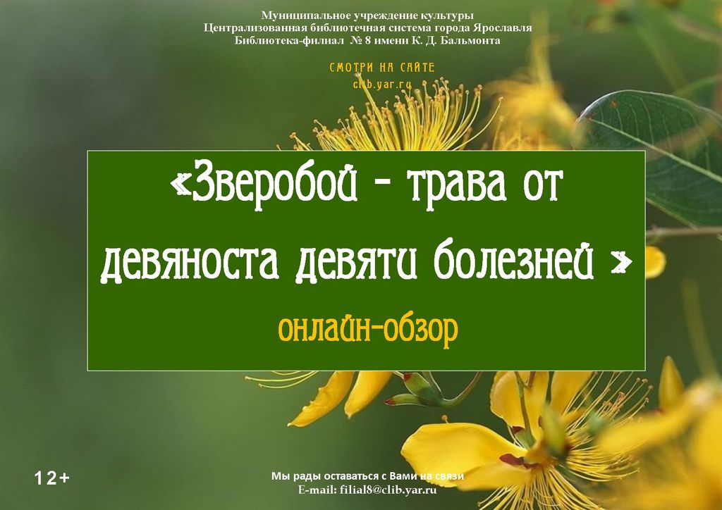 Онлайн-обзор «Зверобой — трава от девяноста девяти болезней»